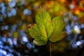 Picture bokeh, sheet, autumn, nature
