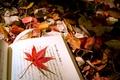 Picture autumn, macro, sheet, foliage, mix, book, Japanese