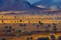 Picture Madagascar, palm trees, Savannah, mountains, landscape