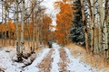 Picture winter, snow, nature, photo, road, forest, birch