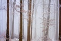 Picture frost, snow, forest, winter
