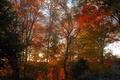 Picture autumn, forest, trees, sunset, forest, Nature, trees, sunset, autumn, fall
