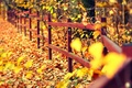 Picture widescreen, leaves, HD wallpapers, Wallpaper, leaves, tree, full screen, yellow, falling leaves, the fence, background, ...