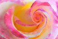Picture color, beauty, macro, the beauty, flower, rose