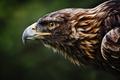 Picture head, animal wallpaper, bird, eagle