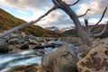 Picture branch, Stones, river, mountains