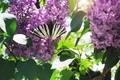 Picture spring, macro, light, lilac, butterfly