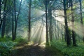 Picture forest, summer, the sun, rays, light, nature, trail, morning