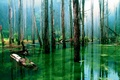 Picture water, dry, nature, trees, swamp, forest, trunks
