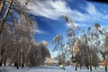 Picture photo, trees, snow, nature, winter