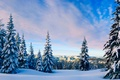 Picture snow, forest, clouds, Winter, trees, sky, nature, landscape