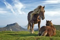 Picture the sky, grass, horse, mountains