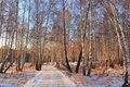 Picture road, trees, winter, forest, birch