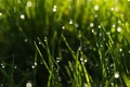 Picture widescreen, HD wallpapers, Wallpaper, water, greens, full screen, green, background, fullscreen, drops, macro, widescreen, background, ...