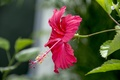 Picture sri lanka, Flowers, thanu, ragul
