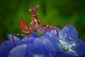 Picture flower, mantis, insect