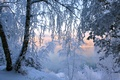 Picture frost, trees, snow, winter