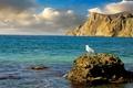 Picture sea, stones, rocks, shore, Seagull, Crimea