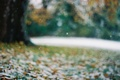 Picture leaves, snowflakes, glare, Tree, blur, bokeh, late autumn, the first snow