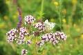 Picture butterfly, summer, flowers purple, grass, purple, pink