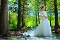 Picture the bride, water, girl, dress, trees, forest, Asian