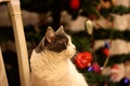 Picture cat, look, tree, New year