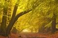 Picture fog, road, autumn, landscape