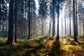 Picture light, autumn, forest, nature