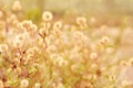 Picture leaves, macro, flowers, branches, background, plant, widescreen, full screen, HD wallpapers, widescreen