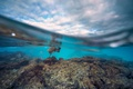 Picture clouds, reefs, over the water, rocks, the sky, turtle, fish, under water, split