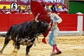 Picture bull, toreador, Spain