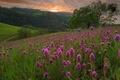 Picture flowers, mountains, Wallpaper from lolita777, hills, tree, field, meadow, summer, landscape