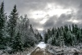 Picture winter, road, forest