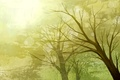 Picture vector, trees, paint, nature