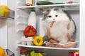 Picture Look, Cat, Cat, Pepper, Animals, Sausage