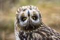 Picture owl, bird, look