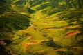 Picture greens, Kamchatka, summer, channel, grass, July, mosses