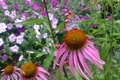 Picture summer, butterfly, flowers, bee, Echinacea