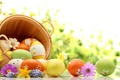 Picture photo, Chamomile, Easter, Eggs, Basket, Holiday