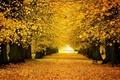 Picture road, autumn, Park, falling leaves