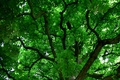 Picture nature, branch, foliage, green background, the crown