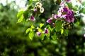 Picture drops, flowers, branches, rain, pink, bougainvillea