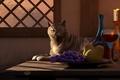 Picture cat, table, window, art, glass, deskridge, wine, candle, fruit, pear, grapes, bowl, cat