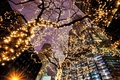 Picture Chicago, backlight, light, skyscrapers, lighting, trees, Chicago, Illinois, the city, lights, garland, the evening, Il, ...