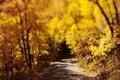 Picture bokeh, road, foliage, autumn, nature