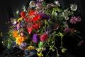 Picture asters, bouquet, Mac, calendula, kosmeya