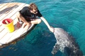 Picture Dolphin, Israel, Eilat, people, communication