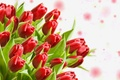 Picture leaves, buds, tulips, bouquet