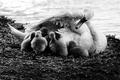 Picture mother, bedtime, swan, love, puppies, children