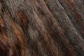 Picture texture, fur, animal texture, background desktop